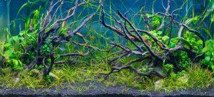 aquarium/plantarium/irplant.ir
