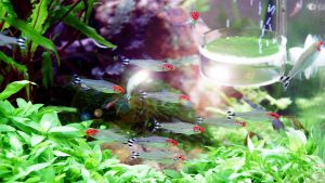 wallpaper.wiki-Fish-Aquarium-Plants-Underwater-Animals-Wallpaper-PIC-WPD005902